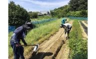 無肥料催場農業体験ペアチケットランチ付 [A2094]