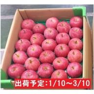【年明け】津軽産まるかじりりんご約5kg 特選・23~25玉程度 品種おまかせ
