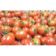 令和元年初物「はなまる農園のミニトマト3kg」