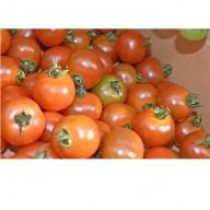 プチッと美味しい!「はなまる農園のミニトマト1kg」(配送不可:北海道・沖縄県・離島地域)