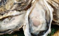湧別サロマ湖産かき【COYSTER(むき身)×2+殻付き龍宮牡蠣5kg】