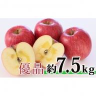 <2019年12月初旬頃よりお届け>北海道壮瞥産 りんご サンふじ 約7.5kg <優品・ご家庭用>