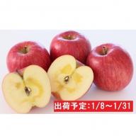 年明け 蜜入り糖度14度以上サンふじ約3kg 青森県平川市産