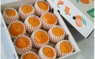 ★とろっとジューシー柑橘の女王 せとか C-123