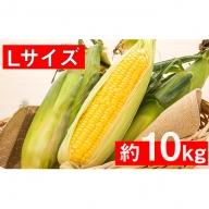 <2020年9月上旬頃お届け>北海道壮瞥産【Lサイズ約25本】とうもろこし恵味(めぐみ)約10kg
