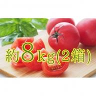 <2020年6月下旬からお届け>約8kg!北海道壮瞥町「FARM K」の美味しい完熟トマト(約4kg×2箱)