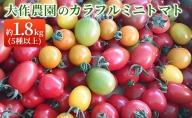 <2021年7月上旬よりお届け>北海道壮瞥産 大作農園のカラフルミニトマト約2kg
