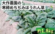 <2021年1月中旬よりお届け>大作農園の寒締めちぢみほうれん草 約1.8kg