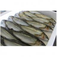 ★物部川のキレイな伏流水で育った 生鮎詰合せ1.5kg C-129
