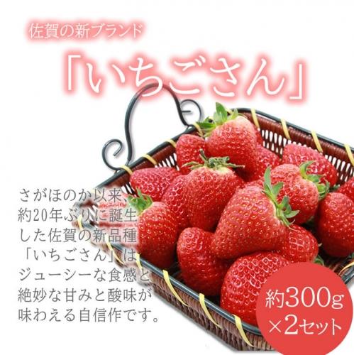 A5-049 新品種 いちごさん 2箱セット ふるかわ農園