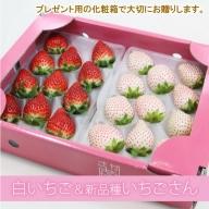 B10-118新品種 パールホワイト&いちごさん(各1パック)水田