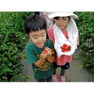 <2020年6月初旬よりお届け>北海道壮瞥町 大作農園 カラフルミニトマト狩り 30分×2名様+カラフルミニトマトお土産付