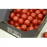 高糖度&高機能性 フルーツトマト1kg A-268