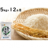5kg×12ヵ月!こだわりの秋田県産ひとめぼれ(土づくり実証米)