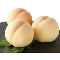 ●先行予約受付●岡山白桃 1.5kg(5~6玉)