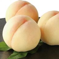 ●先行予約受付●岡山白桃 3kg(9~12玉)