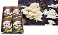 大江町柳川産 原木かのか茸(ブナハリタケ)水煮200g×4缶(固形量)