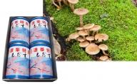 大江町柳川産 天然もだす(ナラタケ)水煮230g×4缶(固形量)