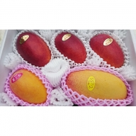 ますみ農園 3種のマンゴー食べ比べセット約2kg