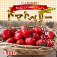 【お試し】幻のミニトマト トマトベリー 800g H004-026