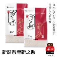 新潟県産新之助 2kg×2袋 ※定期便6回 安心安全なヤマトライス H074-075