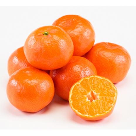 香川オリジナル品種「小原紅早生みかん」約5kg