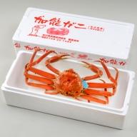 【配達日時指定できます】加能ガニ(雄ズワイガニ、冷凍)(大)