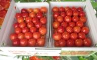 農園厳選さくらんぼ「佐藤錦」Lサイズ以上1kg(品質:ギフト向け)
