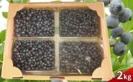 農園の加工用ブルーベリー約2kg(北海道仁木町産)