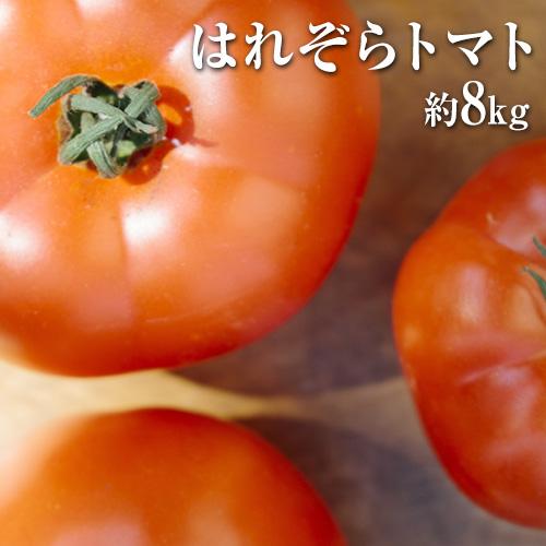 熊本県産 はれぞらトマト 約8kg 四ツ山食品《2019年11月下旬~2020年6月下旬頃より順次出荷(土日祝除く)》 | au PAY ふるさと納税