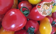 <2020年6月下旬よりお届け>北海道壮瞥産 彩りミニトマト約3kg