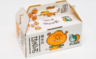 【2022年2月中旬より順次発送】静岡県清水生まれの美味しい柑橘「はるみ約2.5kg」