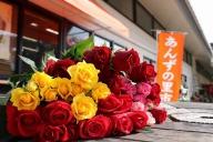 新鮮お花!福津産バラ(通年発送)★あんずの里[C0047]