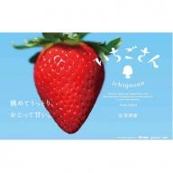 2021年1月中旬~3月末配送 佐賀県産いちご「いちごさん」280g×4p【先行予約】B-523