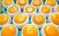 柑橘の女王『せとか美人』