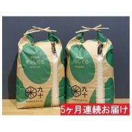 【5ヶ月】青森県産まっしぐら10kg(精米5kg×2)特A 定期便