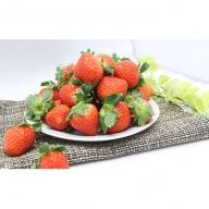 【ご家庭用】イチゴ(さがほのか)約150g×8パック