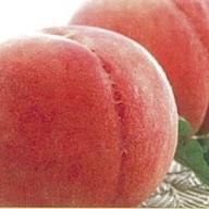 E-00120 山形県産種類おまかせ白桃5kg