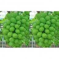 赤磐市産 シャインマスカット 約1.5kg 2房 温室無加湿栽培