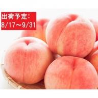 大江町産 最高級「大玉白桃」約3kg(特秀・8~10玉)