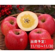 11月 大江町産 高徳りんご約2.5kg
