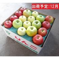 12月 訳あり 旬のりんご詰合せ約10kg(サンふじ確約3種以上) 大江町産