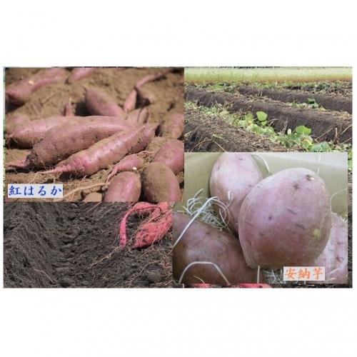 【F14004】2種焼き芋のお楽しみ 詰め合わせセット定期便(約2kg)【全5回】