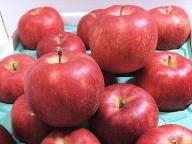 4~6月 さっぱりとした酸味の好きな方ジョナゴールド約5kg 【青森りんご・CA貯蔵・クール便】