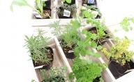 生活の木メディカルハーブガーデン薬香草園 キッチンハーブ苗12個セット