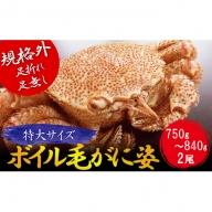 ≪規格外≫北海道産毛がに(足折れ・足無し)特大サイズ2尾セット