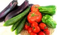有機農産物 夏 野菜 セットーB
