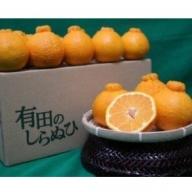 ZE6161_有田の不知火 約4kg【家庭用】