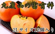 ZD6127_【厳選・産直】和歌山県産の富有柿 12個2Lサイズ