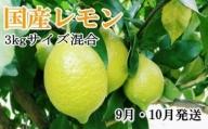 ZD6182_【手選別・産直】紀の川産の安心国産レモン 約3kg